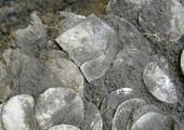 Нашедшему клад в Ида-Вирумаа дадут вознаграждение в размере 55000 евро