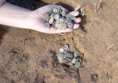 В Астраханской области обнаружен клад золотоордынских монет