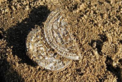 Датчанин нашел клад монет